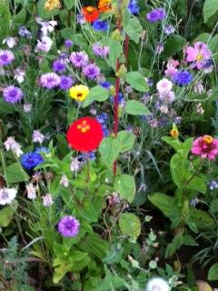 fleurs rouges Versailles