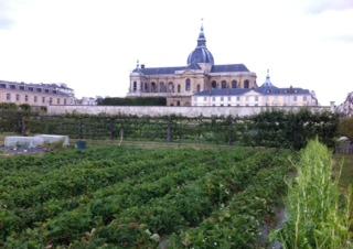 fleurs Versailles