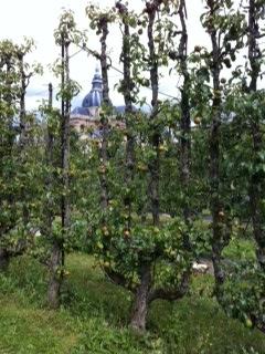 Jardin Versailles 1