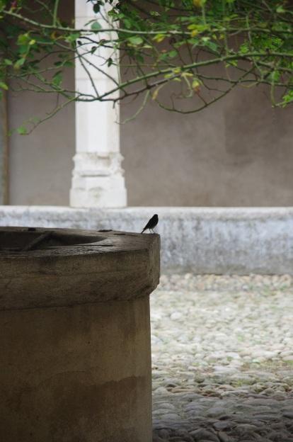 Cloitre oiseau Bdef
